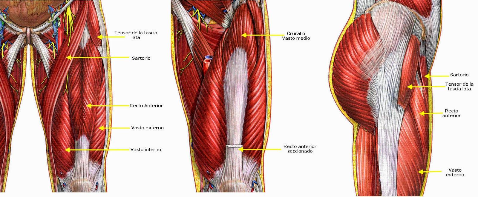 musculos cadera piernas agarrotados